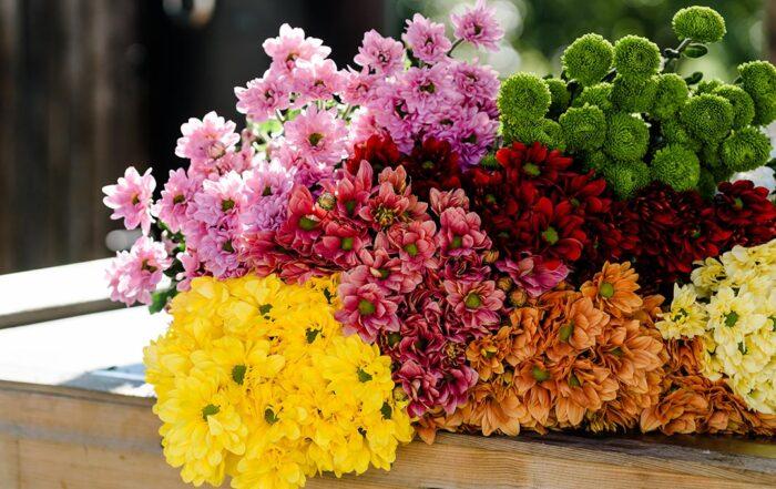 Autumn Favourite Flowers header