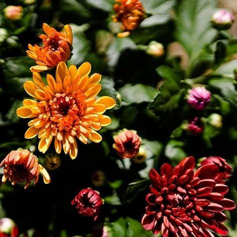 Herfstplanten