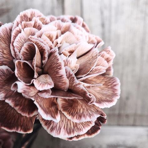 Carnation autumn flowers