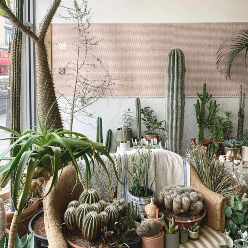 Cactus and Succulents in a flowershop