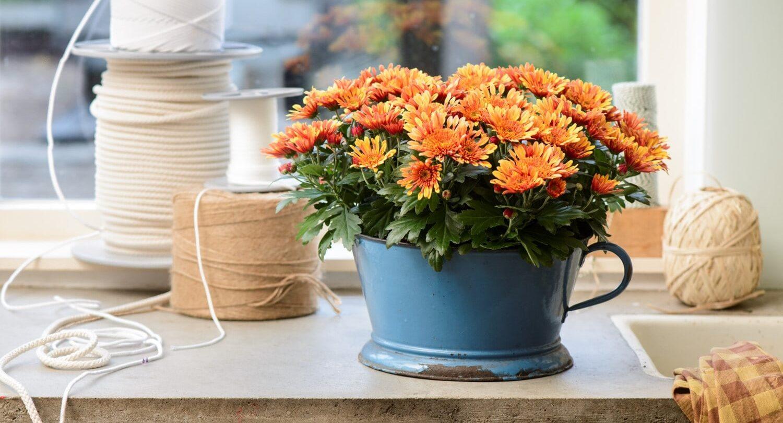 Blühende Herbstpflanzen