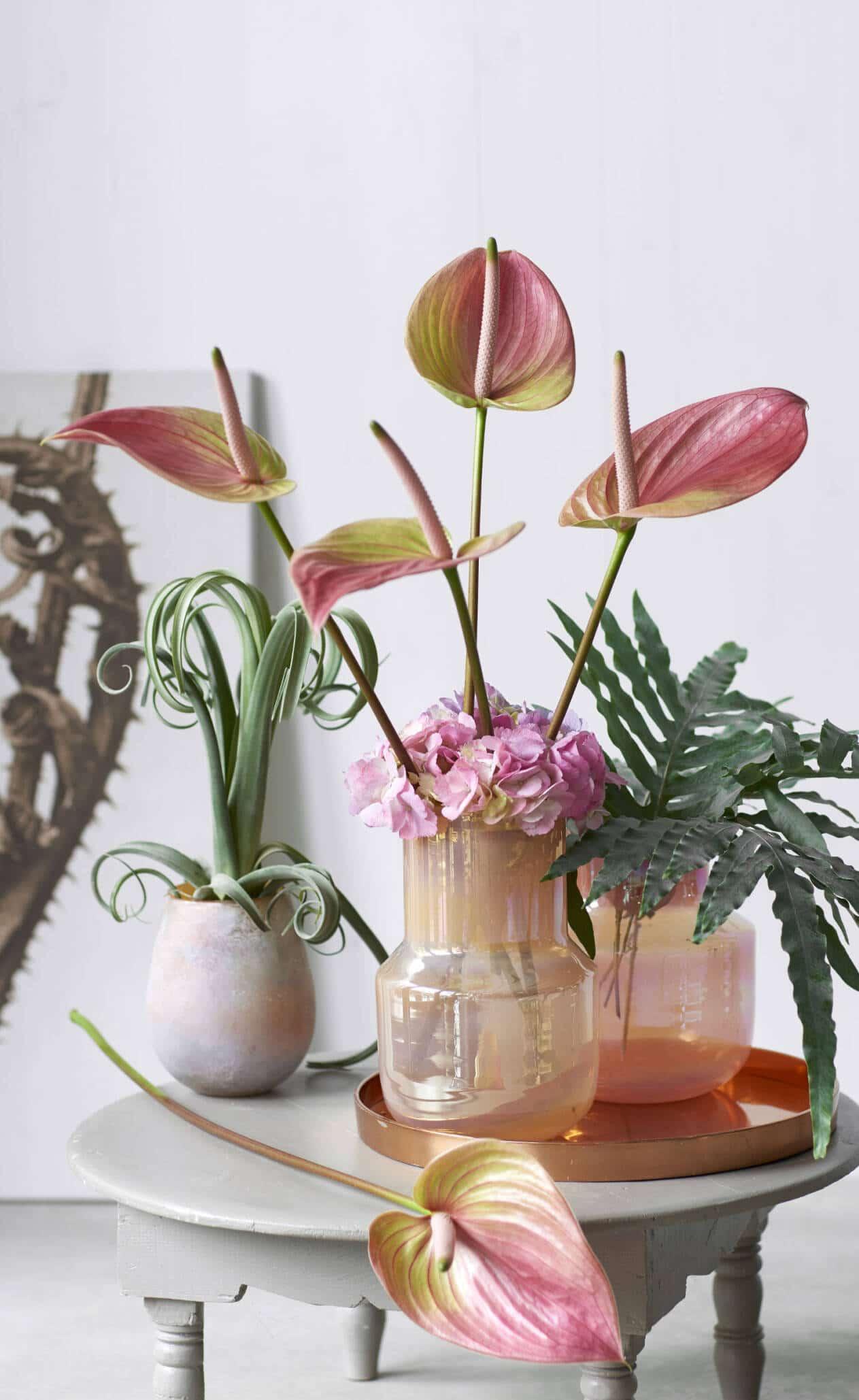 Anthuriums in vase