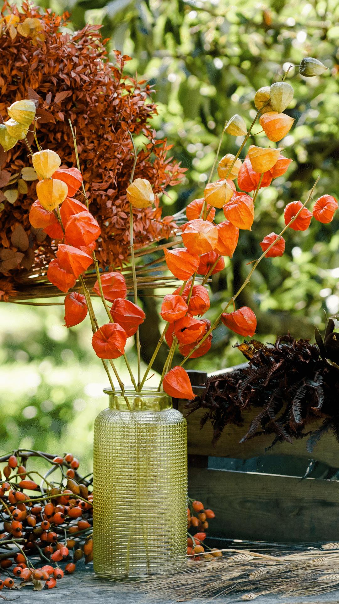 van der plas flowers