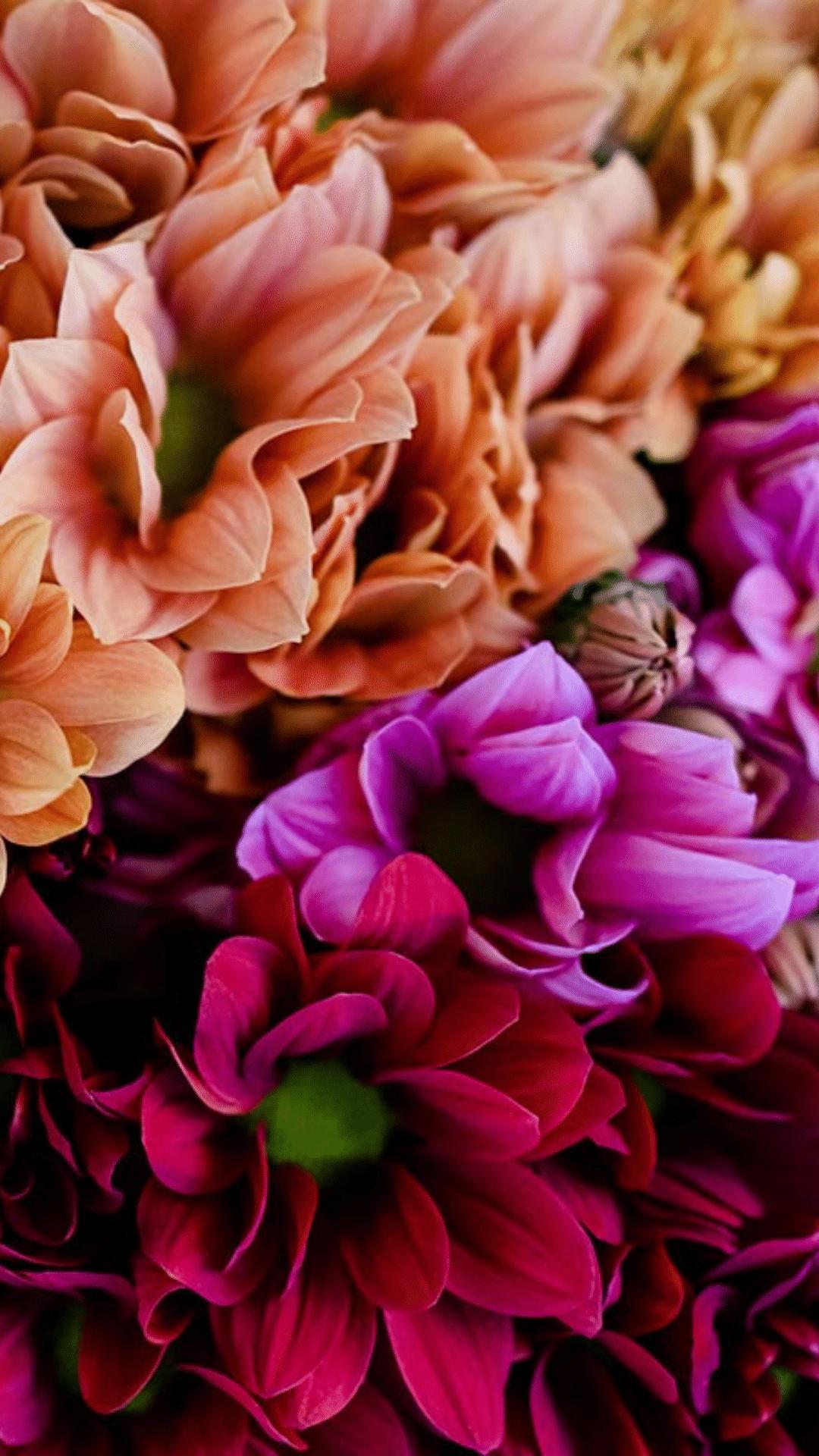 chrysant salm paars en rood