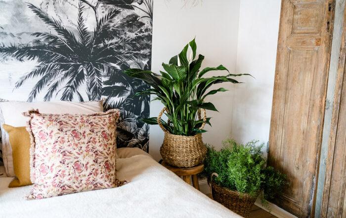 Luftreinigende Pflanzen