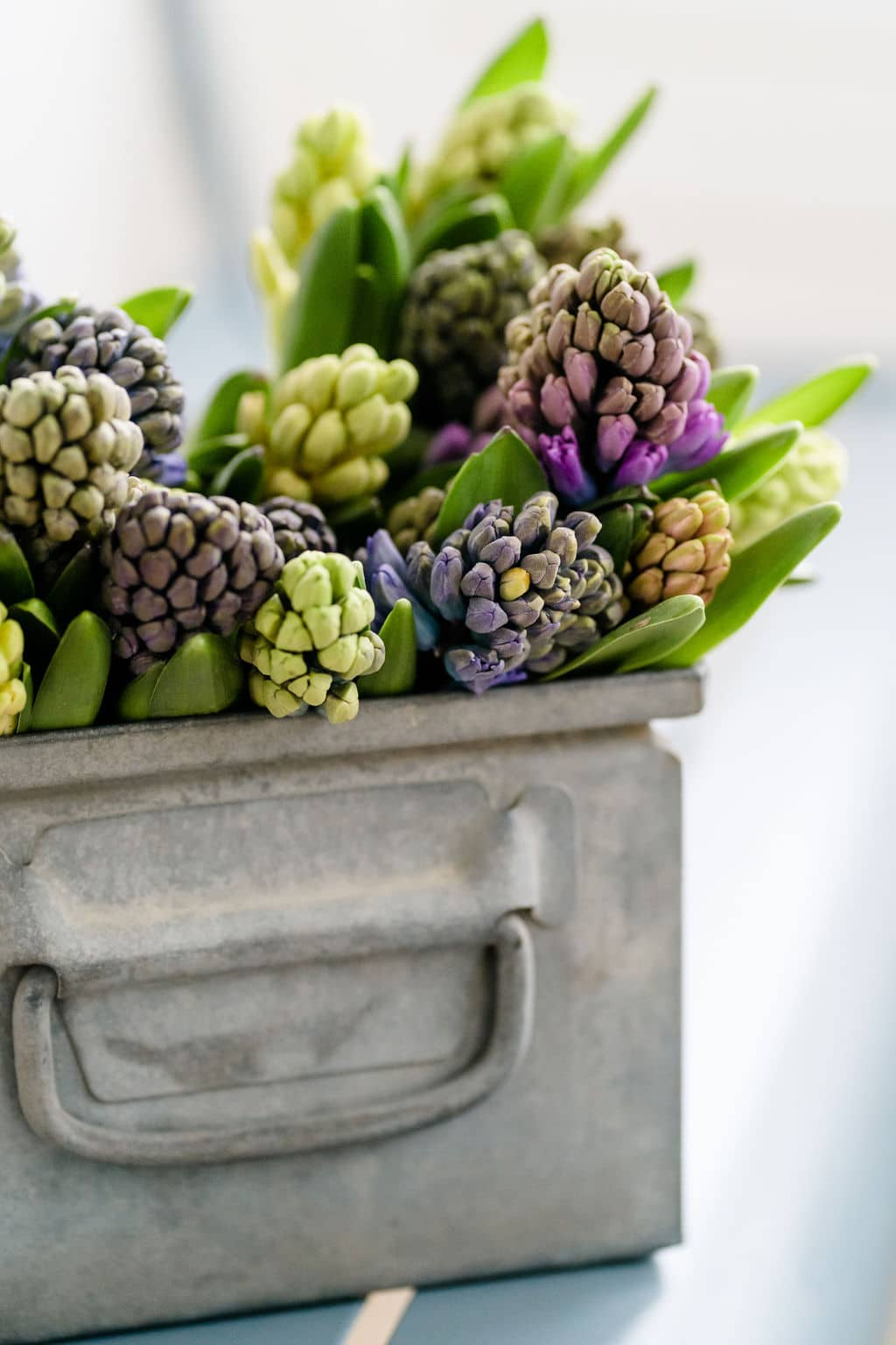 Hyacint inspiratie