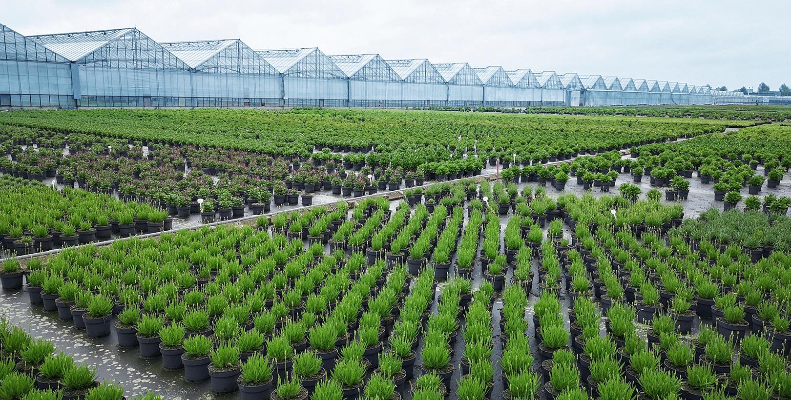 Kwekerij Noordpoel